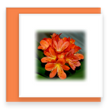 Tropical Flame Garden Party Blooms Mini Square Greeting Card Assorted