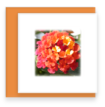 Orange Lantana Mini Greeting Card with Envelope, Mini Note Card