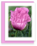 Morning Has Broken Greeting Cards Assorted Bleeding Heart, Delphinium, Stokers Aster Bud, Poppy Flowers