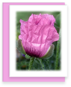 Poppy Greeting Card Garden Party Blooms Note Card Single A2 Card with Envelope