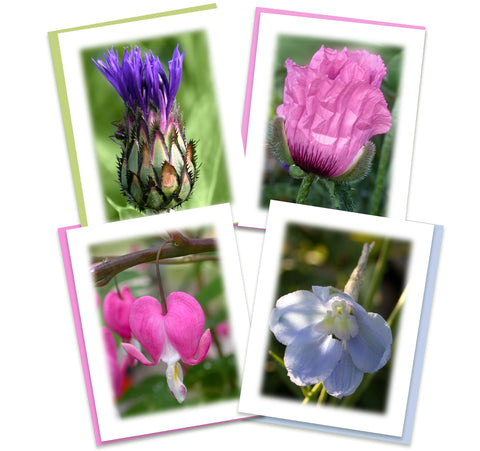 Morning Has Broken Greeting Card Assortment | Set of 4