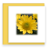 Yellow Mum Garden Party Blooms Mini Square Greeting Card Assorted