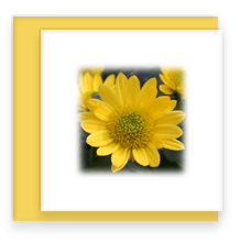 Mini Square Greeting Card Blank Inside with Envelope Mum Flower