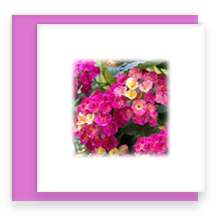 Pink Lantana Mini Greeting Cards with Envelope, Mini Note Card