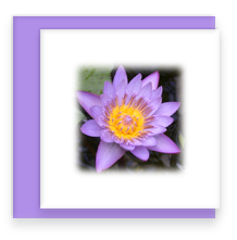 Purple Waterlily Mini Greeting Card with Envelope, Mini Note Card
