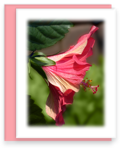 Coral Hibiscus Greeting Card Garden Party Blooms Note Card Single A2 Card with Envelope