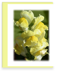 Snapdragon Greeting Card Garden Party Blooms Note Card Single A2 Card with Envelope