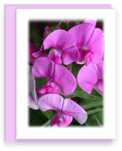 Sweet Pea Greeting Card Garden Party Blooms Note Card Single A2 Card with Envelope