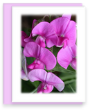 Rainbow Garden, Garden Blooms Greeting Cards, Assorted, Sweet Pea