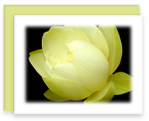 Lotus Greeting Card Garden Party Blooms Note Card Single A2 Card with Envelope