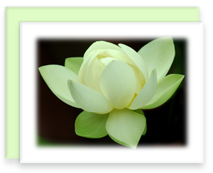 Lotus Bloom Greeting Cards Garden Party Blooms Note Card Single A2 Card with Envelope