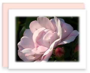 Pink Rose Greeting Card Garden Party Blooms Note Card Single A2 Card with Envelope