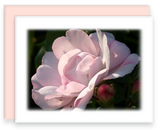 Garden Party Blooms A2 Greeting Cards, Blank Inside, Serenity Collection Rose Flowers