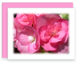 Still Garden, Garden Blooms Greeting Card Assorted Pink Begonia Blooms