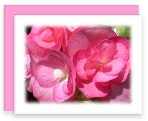 Begonia Greeting Card Garden Party Blooms Note Card Single A2 Card with Envelope
