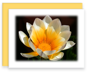 Gazania Greeting Card Garden Party Blooms Note Card Single A2 Card with Envelope