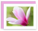 Still Garden, Garden Blooms Greeting Card Assorted Magnolia Bloom