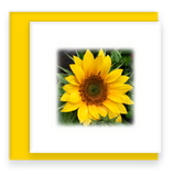 Oh Happy Day Garden Party Blooms Assorted Set of Mini Greeting Cards Sunflower Flower