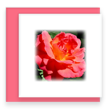 Sunset Rose Mini Greeting Card with Envelope, Mini Note Card
