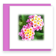 Twin Lantana Mini Greeting Card with Envelope, Mini Note Card