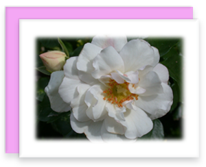 White Rose Greeting Card Garden Party Blooms Note Card Single A2 Card with Envelope