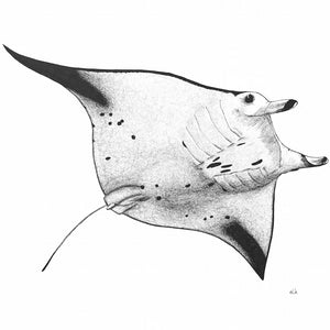 elk draws manta ray hand drawn greeting card
