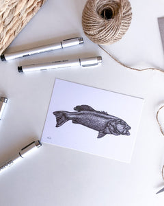 hand drawn black and white coral trout postcard by elk draws