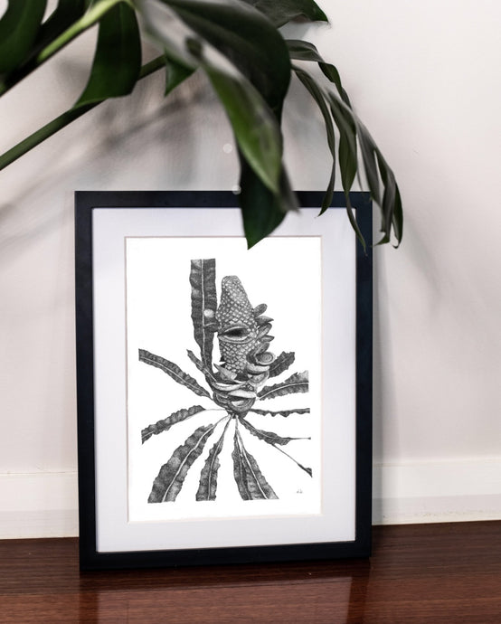 Limited Edition fine art ink drawing banksia native plant by elk draws