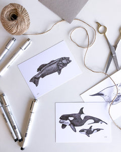 hand drawn black and white coral trout and orca postcards by elk draws