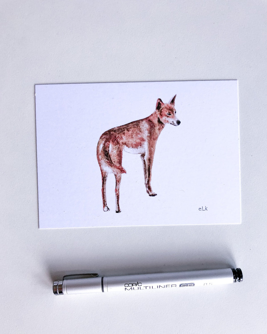 elk draws dingo postcard recycled paper