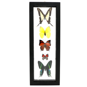 Moth and Butterfly Specimen Collection - Sindur
