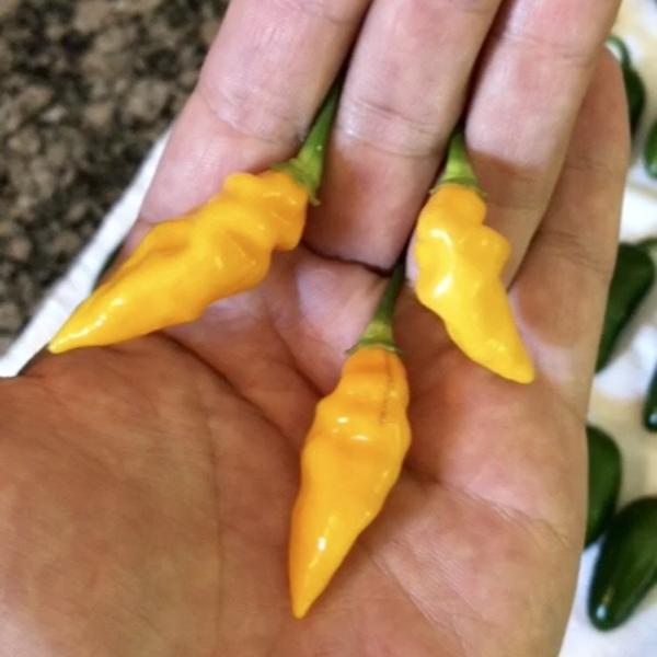 Lemon Habanero {3-Pack}