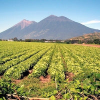 GUATEMALA Antigua Pastores Green Unroasted 1kg
