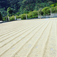 GUATEMALA FINCA CEYLAN ORGANIC RFA/UTZ BIRD FRIENDLY