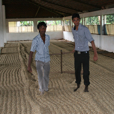 INDIAN MONSOON MALABAR Green Unroasted 1kg
