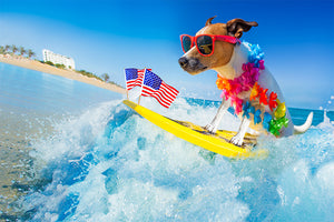 Summer Tips - Keeping Your Dogs Cool, Healthy and Safe