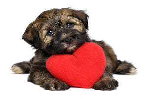 Healthy Heart – Healthy Dog