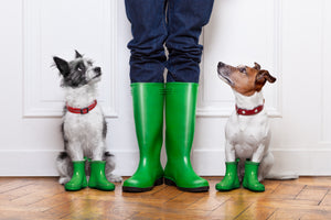 5 Tips on Walking Your Dog in the Rain