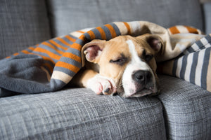 6 Common Dog Health Problems