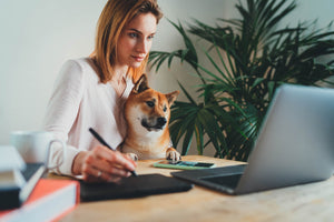 Survival Guide: How to Work from Home with Dogs