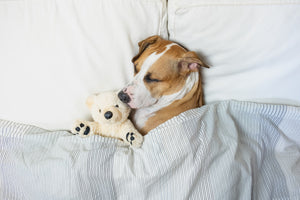 Does Your Dog's Sleep Position Mean Anything?