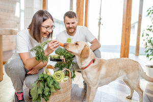 10 Healthy Herbs to Boost Your Dog's Diet