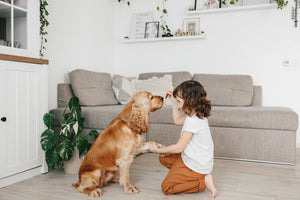 5 Training Habits Your Dog Must Learn Early