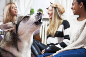 Tips on Understanding the Sounds Your Dog Makes