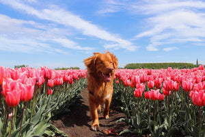 6 Steps to Keep Your Dog Safe & Healthy This Spring