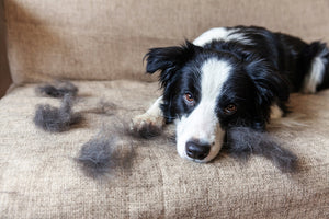 4 Tips on Cleaning Up Dog Hair