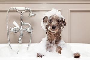 It's Bath Time! Tips for Dog Bathing at Home