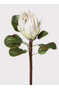 white king protea
