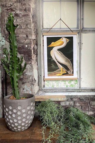 Vintage Pelican Print/Wall Canvas