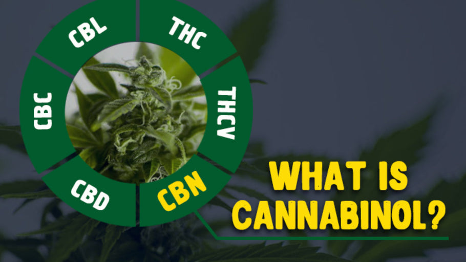 What Is CBN (Cannabinol) & what are the benefits of this Cannabinoid?